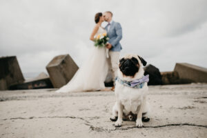 Wedding Videographer Banksmeadow